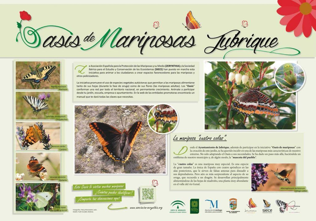 Dossier Oasis Mariposas de Jubrique