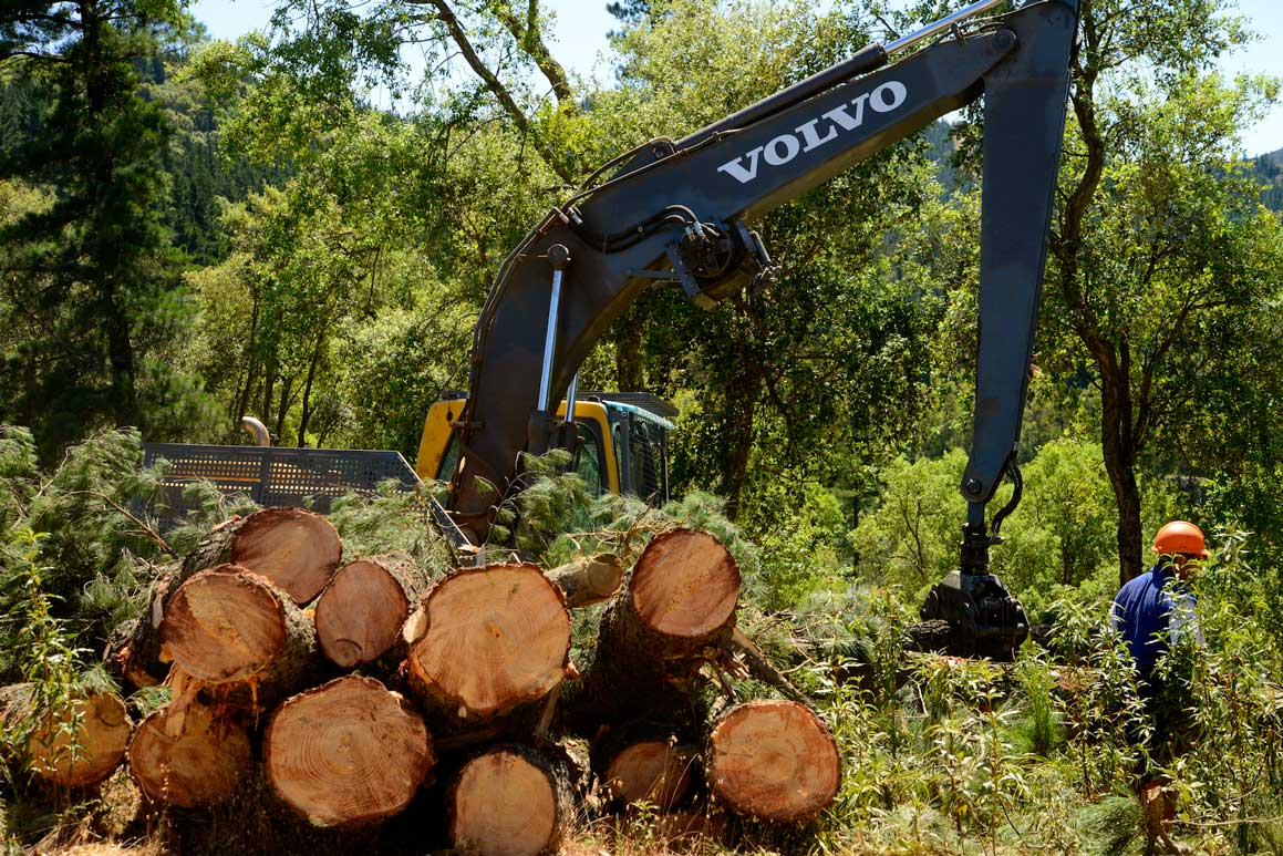 Trabajo forestal