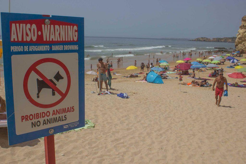 Praia do Amado. Portimâo. Algarve