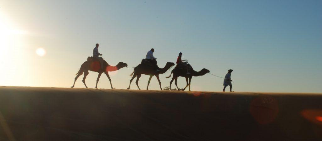 Dromedarios en Merzuga (Marruecos)