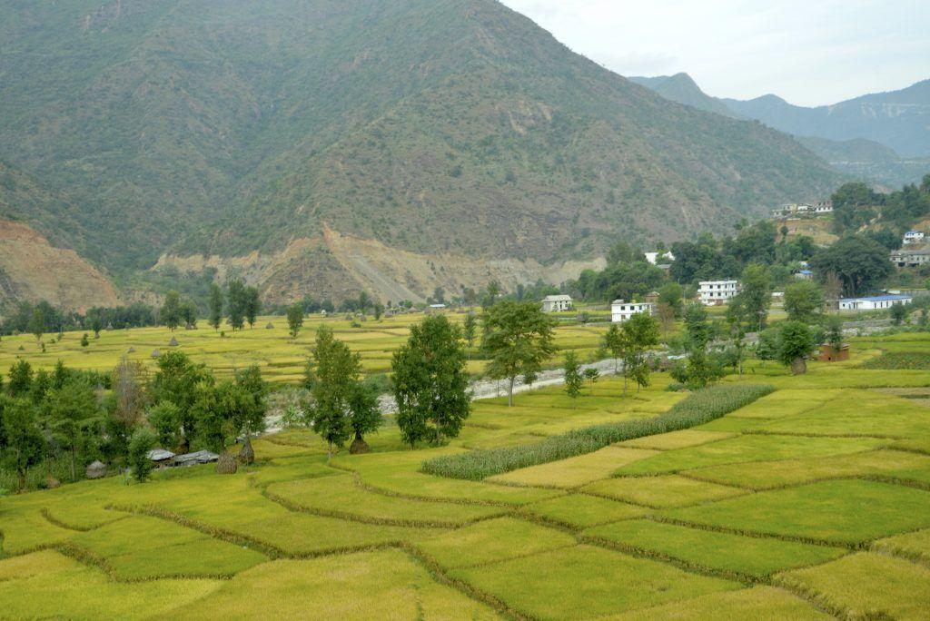Cultivos de arroz en la orilla del rio Sunkhosi. Nepal
