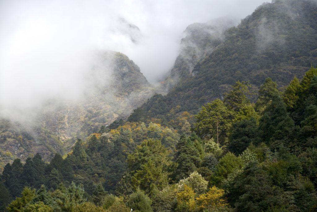 Bosque montano caducifolio en Lukla. Nepal
